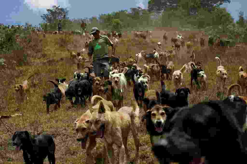 29.abr.2016 - Alguns cachorros de rua da Costa Rica ganharam uma ótima segunda chance. Apesar de terem sido abandonados, os animais foram acolhidos em um santuário para cães considerado como o mais feliz do mundo. O abrigo é o lar de mais de 750 cachorros e conta com 152 hectares para garantir que os animais brinquem e corram alegres - Juan Carlos Ulate/ Reuters