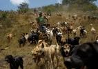 O abrigo mais feliz do mundo: 750 cães de rua vivem em santuário na Costa Rica - Juan Carlos Ulate/ Reuters