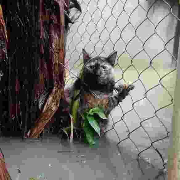 Animais ficam ilhados em meio a enchente na sede da ONG Focinhos de Luz, no Rio - Divulgação/ Focinhos de Luz