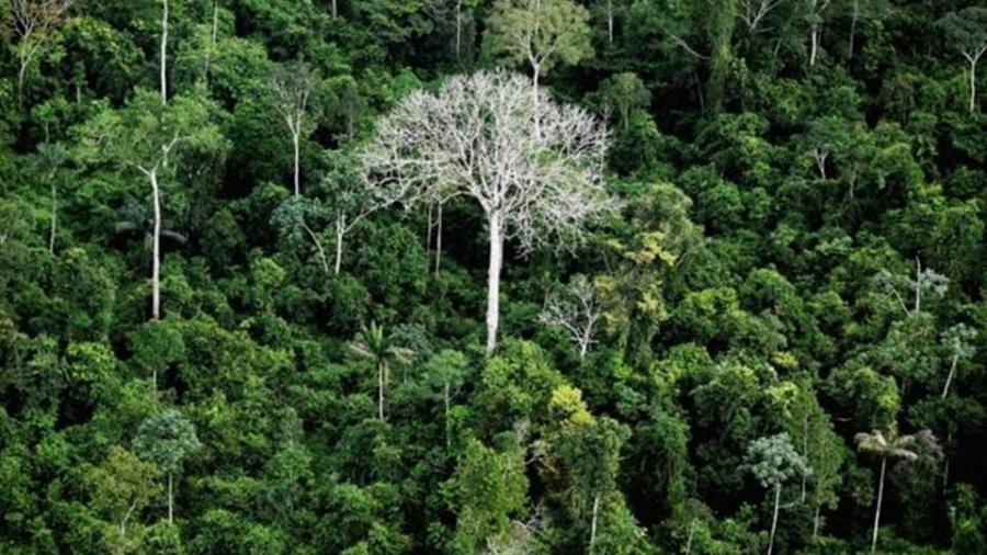 Perdas de floresta virgem contabilizadas por relatório podem ser, em muitos casos, a degradação - GETTY IMAGES