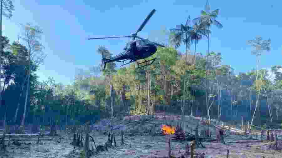 PF destruiu cerca de 350 mil pés de maconha no Maranhão - Divulgação/PF
