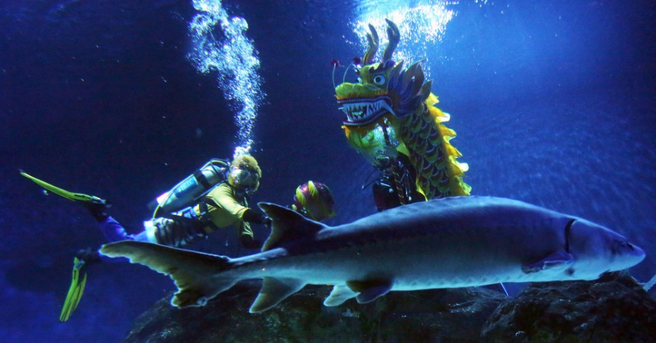 4.fev.2016 - Mergulhadores se apresentam no aquário de Pequim em meio a peixe e um dragão chinês. O Aquário de Pequim lançou uma série de atividades folclóricas em homenagem ao Festival da Primavera, que neste ano começa no dia 8 deste mês