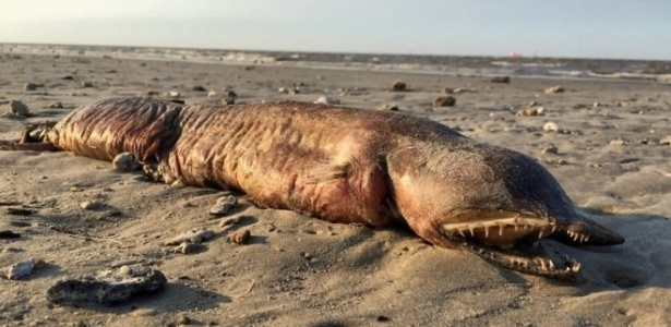Preeti Desai usou as redes sociais para tentar identificar esse animal, que encontrou numa praia em Texas City
