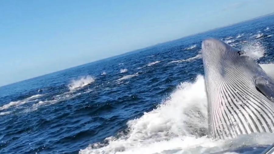 Homem é jogado ao mar após baleia se chocar com barco de turismo - Reprodução/ YouTube / Kennedy News & Media