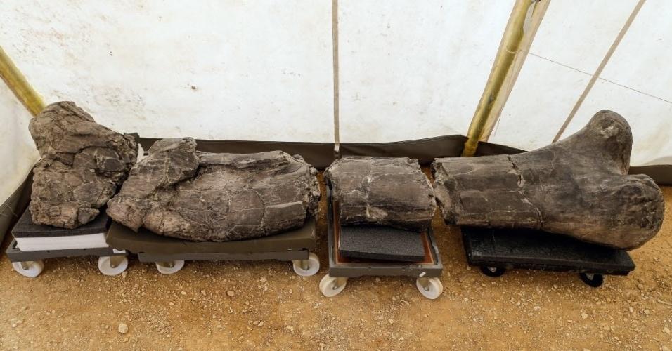 3.ago.2015 - O mais longo fêmur de um dinossauro foi encontrado no sítio arqueológico de Angeac-Charente, no sudoeste da França. O osso pertence à infraordem dos saurópodes, conhecido pelo corpo enorme, pescoço muito comprido e cabeça muito pequena. O sítio arqueológico francês é um dos mais importantes pela enorme quantidade de fósseis de dinossauros presentes