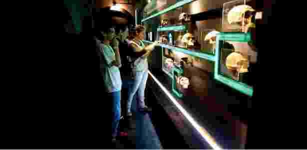 Jovens visitam exposição permanente Do macaco ao homem, no Catavento Cultural, em São Paulo - Leo Ramos/Revista Pesquisa Fapesp