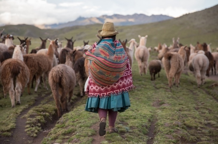 Período de seca. Uma mulher da etnia Quechua pastoreia lhamas, alpacas e ovelhas de volta ao povoado nas montanhas do Peru. A seca nos Andes ameaça a segurança alimentar daqueles que vivem da terra
