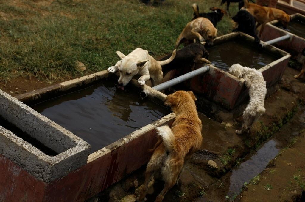 29.abr.2016 - Alguns cachorros de rua da Costa Rica ganharam uma ótima segunda chance. Apesar de terem sido abandonados, os animais foram acolhidos em um santuário para cães considerado como o mais feliz do mundo. O abrigo é o lar de mais de 750 cachorros e conta com 152 hectares para garantir que os animais brinquem e corram alegres
