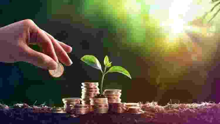 Alguns pesquisadores têm se especializado no cálculo, em dinheiro, dos serviços oferecidos pela natureza - Getty Images/BBC - Getty Images/BBC