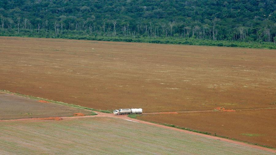 Fronteira entre área de produção de soja e floresta amazônica em Mato Grosso - Paulo Whitaker