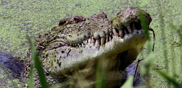 Crocodilo em um lago de uma fazenda de crocodilos na Austrália
