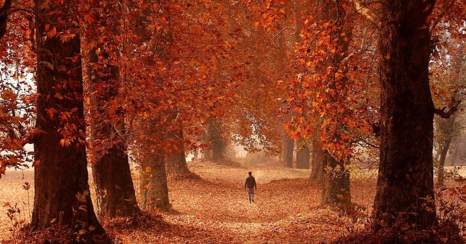 16.nov.2016 - Homem anda através de jardim em um dia do outono em Srinagar, na Caxemira (Índia)