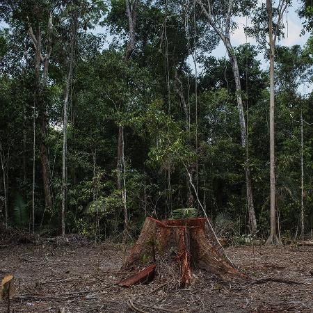 Área desmatada para grilagem dentro da Floresta Nacional Bom Futuro em Rondônia - Lalo de Almeida/ Folhapress
