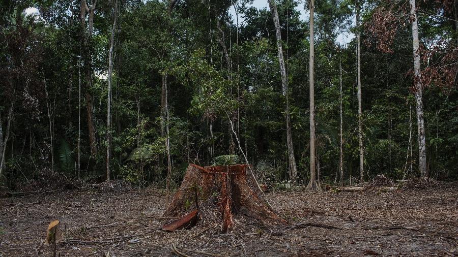 Área desmatada para grilagem dentro da Floresta Nacional Bom Futuro em Rondônia - Lalo de Almeida - 14.ago.2018/Folhapress