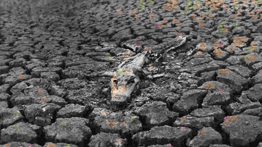 Carcaça de Jacaré em meio a um rio seco no Pantanal de Mato Grosso - Marina Garcia/ UOL