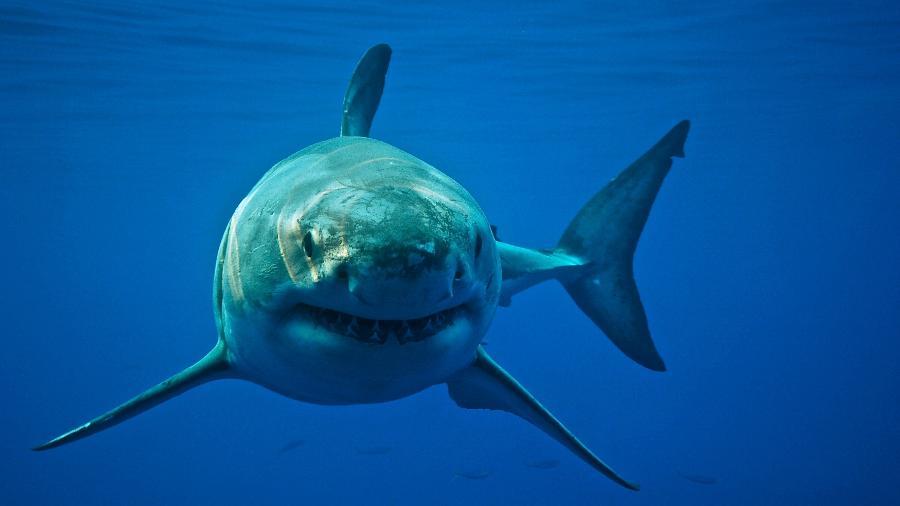 """O """"roubo"""" teria ocasionado uma série de alarmes falsos sobre a presença do animal na costa da Austrália - Cat Gennaro/Getty Images"""