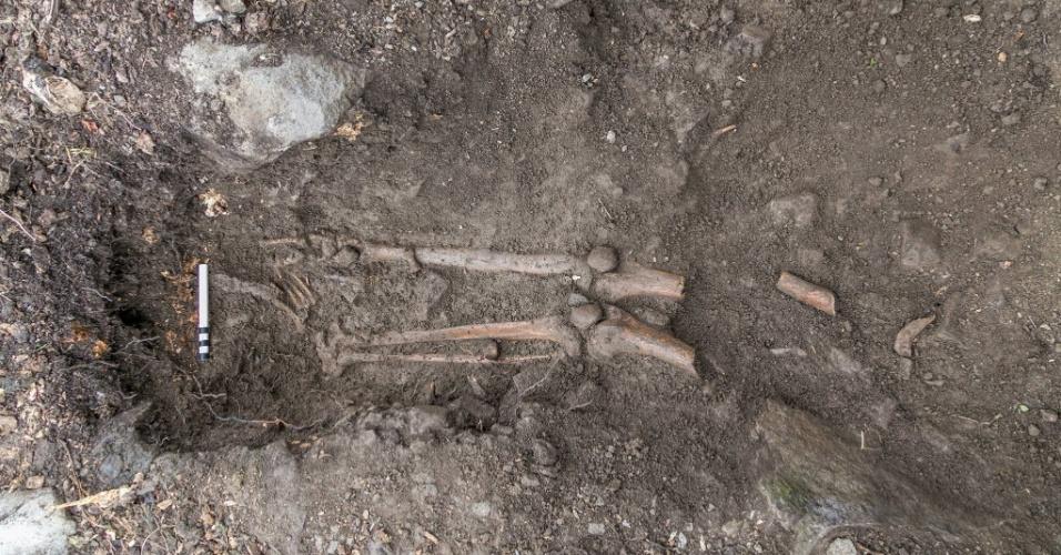 15.set.2015 - Um esqueleto de mil anos foi descoberto entre as raízes de uma árvore na cidade irlandesa de Collooney, após uma forte tempestade derrubar a planta, que tinha 200 anos. Os restos mortais são de um homem entre 17 e 25 anos e marcas no esqueleto sugerem que ele morreu após ser golpeado por uma lâmina afiada. Análises de radio carbono indicam que a morte aconteceu entre 1030 e 1200 d.C.