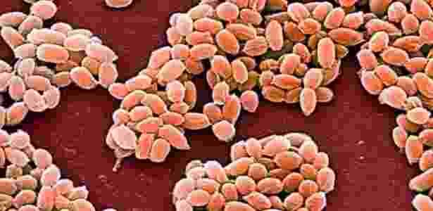 Bactéria 3 - Cultura RM/Alamy - Cultura RM/Alamy