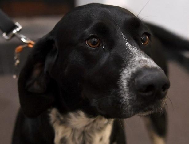 Cachorra Tyaska se perdeu em incêndio trágico ocorrido em Portugal