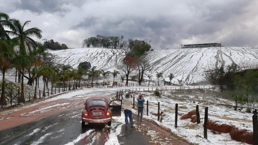 Morador registra plantação coberta de gelo em Santa Rita de Caldas, no sul de Minas Gerais - Reprodução Jornal das Gerais
