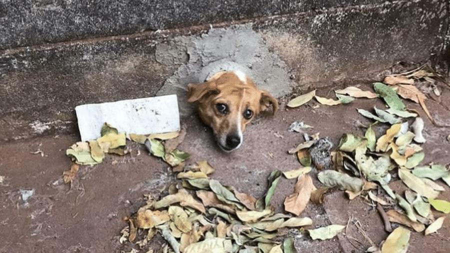 Cadela ficou com a cabeça presa em um cano de PVC, em Quirinópolis (GO). Ela foi resgatada pelos bombeiros, sem ferimentos - Corpo de Bombeiros de Goiás/Divulgação