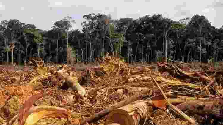 Desmatamento na Amazônia atingiu em 2020 o maior índice dos últimos 12 anos - Getty Images - Getty Images
