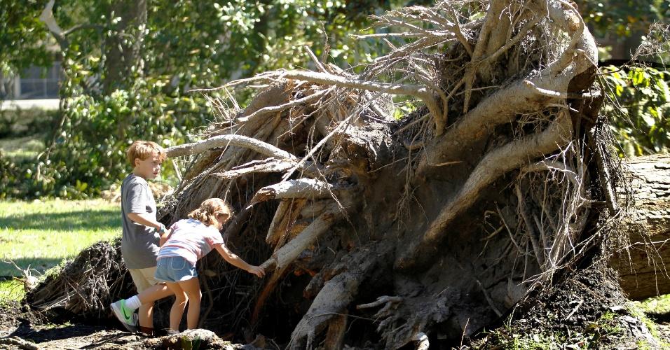 9.out.2016 - Crianças observam árvore arrancada pela raiz em Savannah, Geórgia (EUA), após passagem do furacão Matthew
