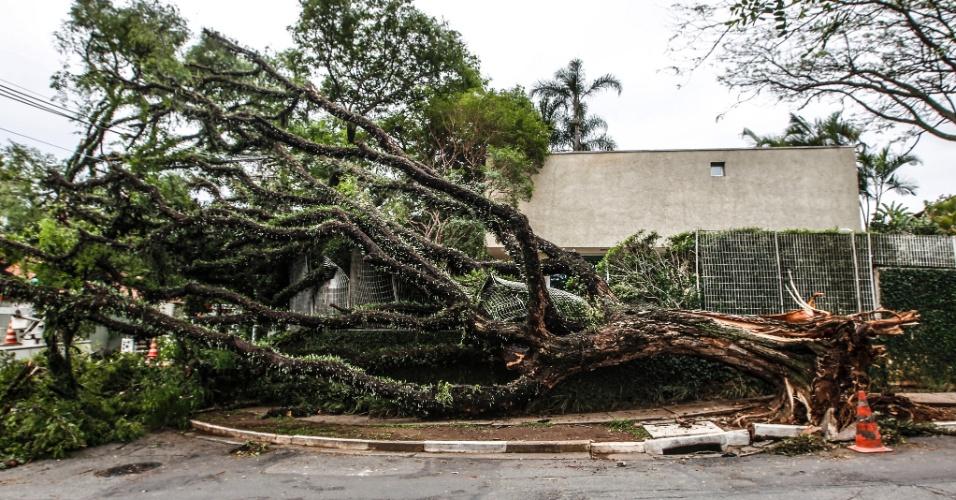 21.out.2016 - Árvore caiu na rua Décio Reis após forte chuva na noite desta quinta-feira (20), em São Paulo