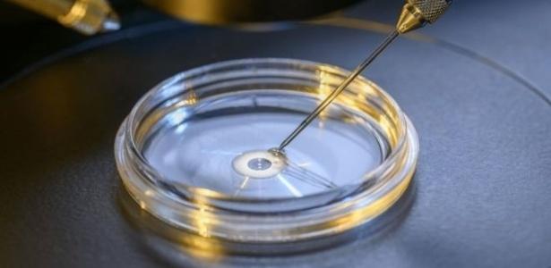 Pesquisas com embriões humanos estão gerando debates sobre ética na comunidade científica