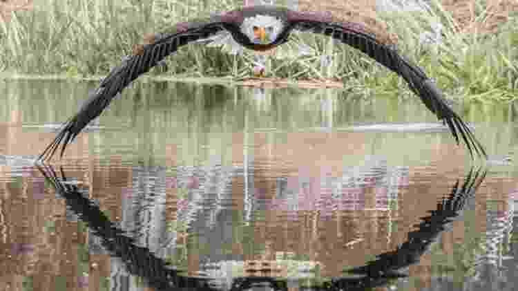 Steve Biro fez registro de águia-de-cabeça-branca em santuário de aves de rapina no Canadá - Steve Biro/BBC - Steve Biro/BBC