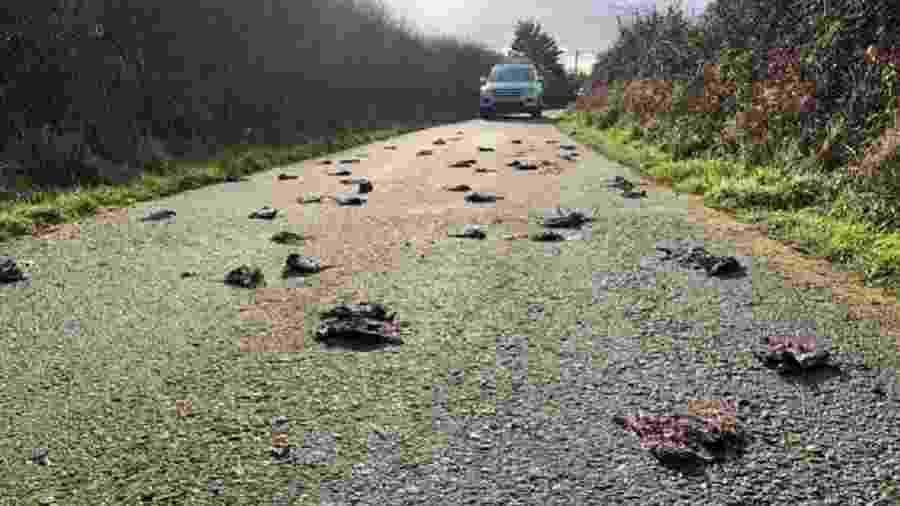 Imagem chocante mostra corpos de aves em pista de estrada em Anglesey, no País de Gales - Reprodução/Twitter