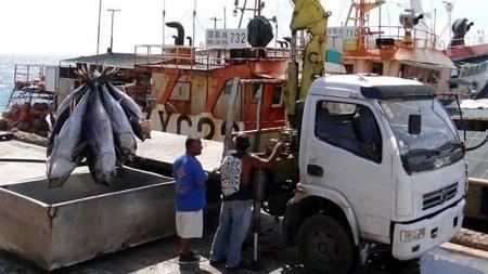 Atum sendo descarregado para ser exportado em Majuro - Getty Images