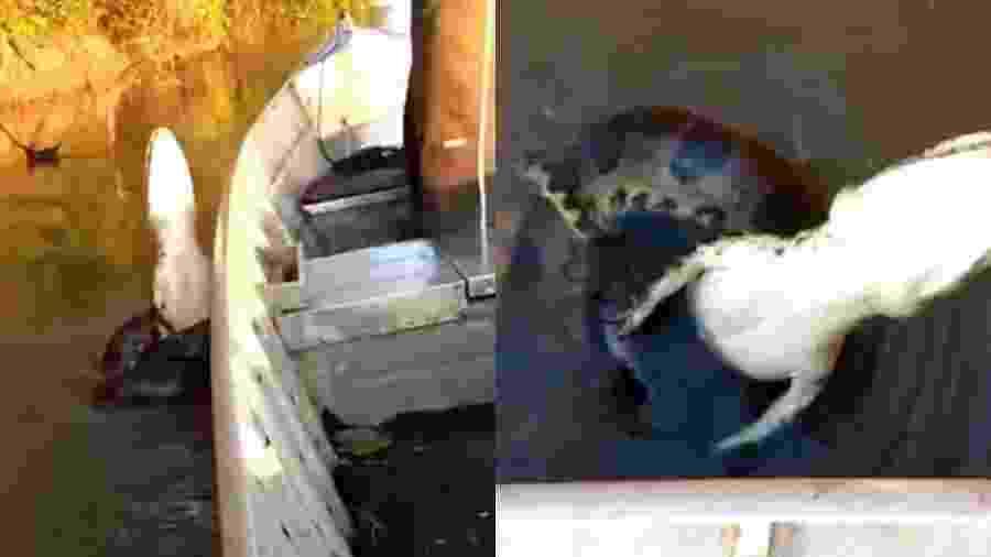 Os pescadores foram criticados por não cortarem o anzol no qual o jacaré estava preso - Reprodução/Instagram/@pantanal.pesca