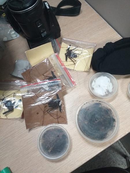 Homem escondeu peixes e insetos para tentar trafica-los - Divulgação/Receita Federal