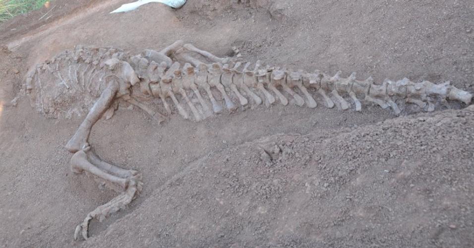 8.dez.2015 - Um fóssil de dinossauro recém-descoberto é visto na província de Yunnan, na China. Dois fósseis de dinossauros foram desenterrados há um mês e identificados como Lufengosaurus magnus e Lufengosaurus huenei. Eles viveram há cerca de 180 milhões de anos. Eram herbívoros de pescoço comprido e alcançavam até 9 metros de altura