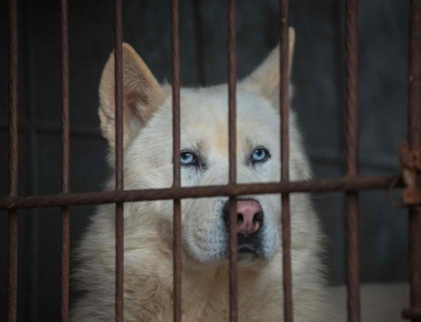 Cachorro é mantido em gaiola em fazenda em Wonju, na Coreia do Sul