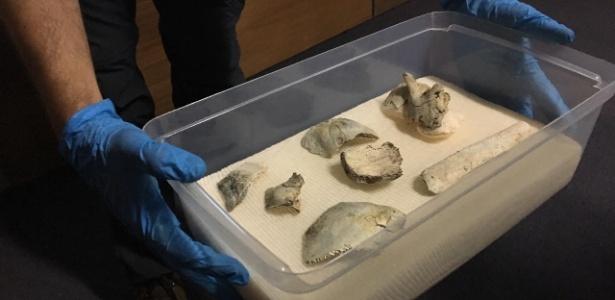 Fragmentos do fóssil humano mais antigo das Américas - Marina Lang / Colaboração para o UOL