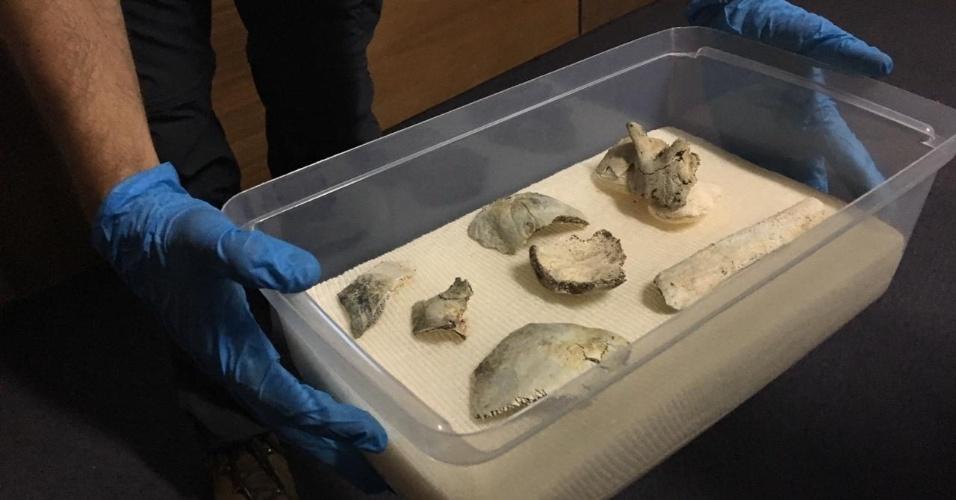 Resgatado de incêndio | Museu Nacional acha o crânio de Luzia