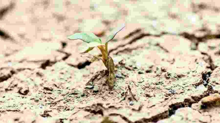 A vida sempre encontra um caminho... e algumas plantas são concebidas para sobreviver, não importa o que aconteça  - Getty Images
