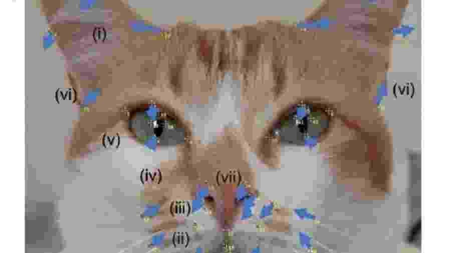 Pessoas de 85 países assistiram a vídeos de gatos em situações prazerosas ou desconfortáveis - Divulgação
