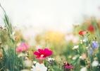 Primavera: O que é o equinócio, que marca o início da estação tão especial - Getty Images