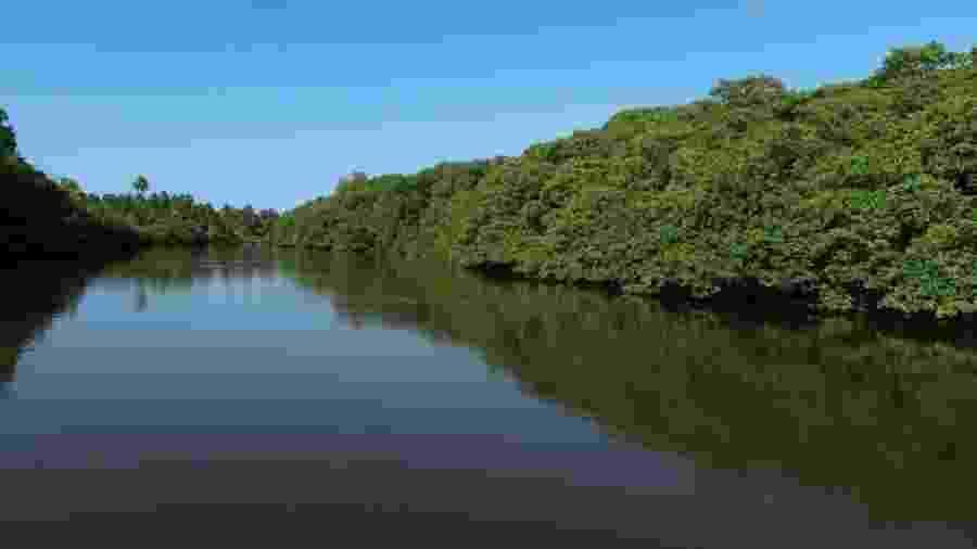 Manguezal é considerado um ecossistema essencial para o planeta: é berçário da vida marinha e contribui para o combate do aquecimento global - Clemente Coelho Júnior/Divulgação