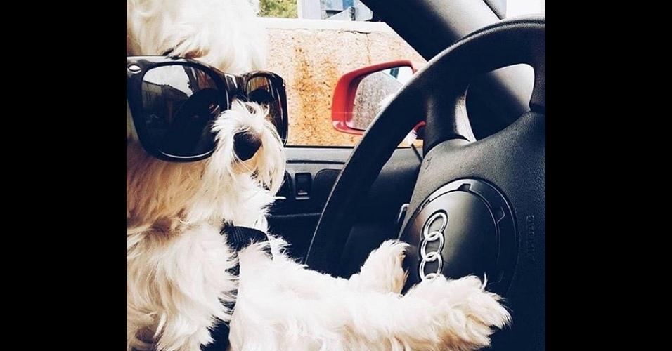 11.jul.2016 - Para curtir as férias, alguns cãozinhos --nada humildes-- tiveram a oportunidade de desfrutar dos melhores passeios e, se não bastasse, fizeram questão de ostentar todo o glamour no Instagram. Além de festas na piscina, na praia ou não campo, passeios em carros importados, jatos particulares e cruzeiros. Tudo isso regado a muito champanhe e marcas de grife. É de deixar qualquer um com certa invejinha, não?