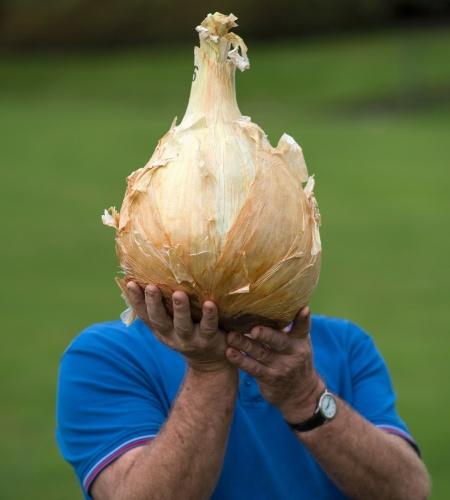 16.set.2016 - Cabeça de cebola? É apenas o britânico Joe Atherton posando com sua cebola de 7 kg no concurso de Cebola Mais Pesada em  Harrogate, na Inglaterra