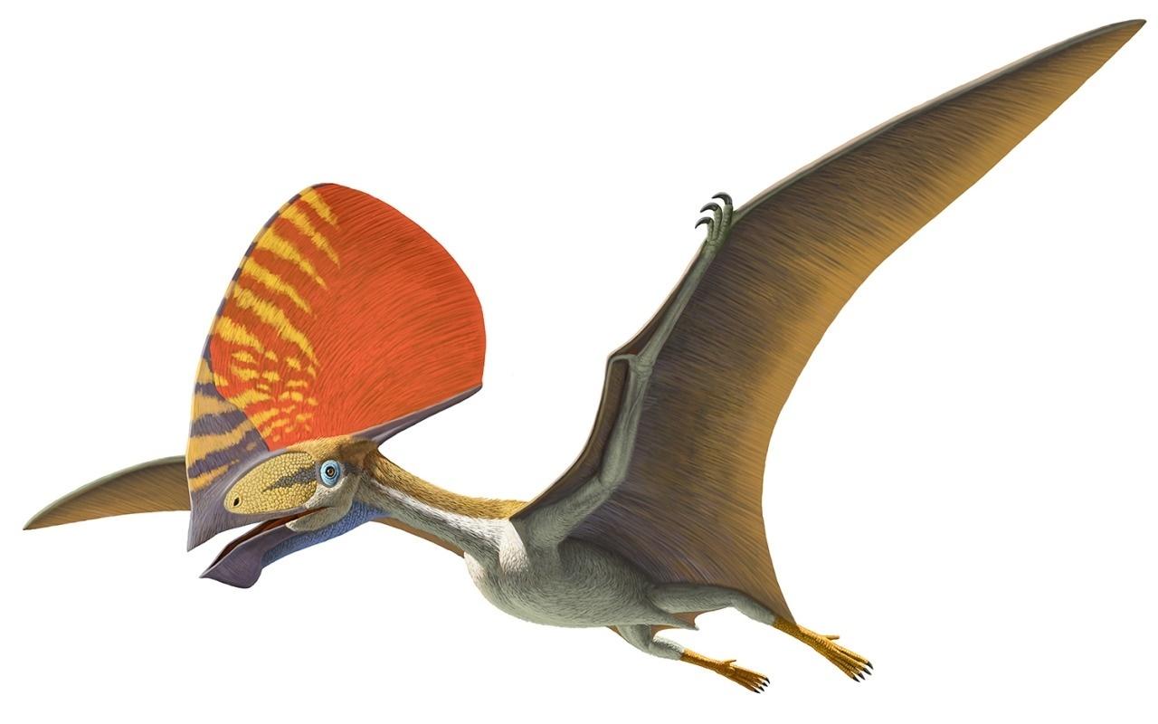 20.set.2016 - Tapejaríneos Tupandactylus também foi encontrado no Ceará e tem a maior crista craniana conhecida para qualquer animal. As cristas (craniana e mandibular) são características dos tapejaríneos