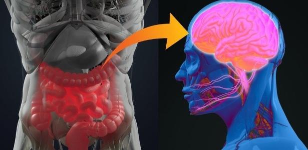 O estudo mostra que pessoas que retiraram o apêndice tiveram redução nas chances de desenvolver Parkinson