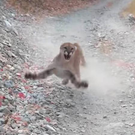 EUA: Homem grava momento em que é perseguido por puma em trilha; veja - Divulgação/YouTube
