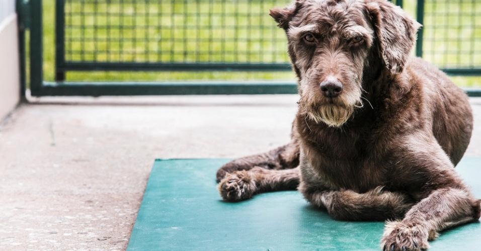 Choquito chegou ao Centro de controle de Zoonoses no dia 8 de junho de 2011. Ele foi encontrado acidentado em via pública. Foi cuidado pelos profissionais do CCZ e sofreu amputação de parte da pata posterior direita e orelha direita. A idade estimada pelos veterinários é de 8 anos