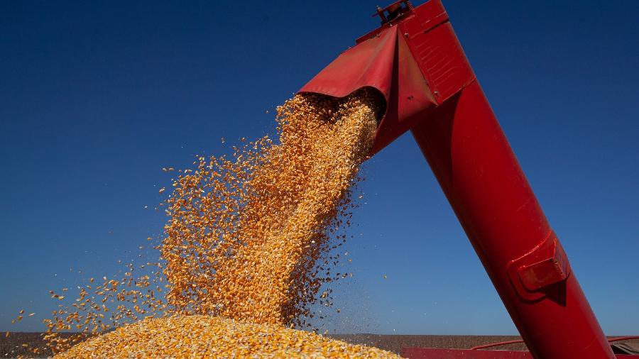 Houve queda de 1,6% em relação à última estimatia do IBGE, representando 4,2 milhões de toneladas a menos - Divulgação/CNA