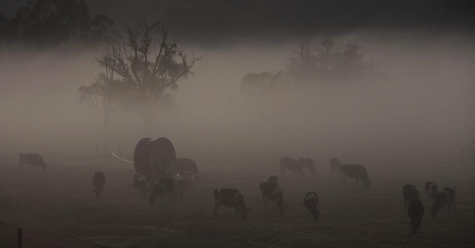 20.jan.2016 - Névoa encobre um campo com animais em Cundimarca, na Colômbia, durante uma geada. O país Colômbia vive seu janeiro mais quente dos últimos cinco anos por causa do fenômeno El Niño, mas algumas regiões enfrentam frio